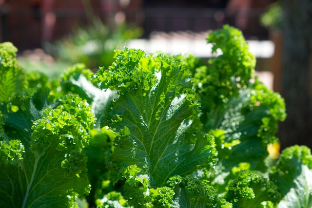 best food to grow for survival